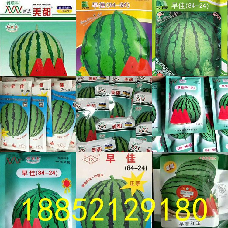 西瓜育苗的主要品种
